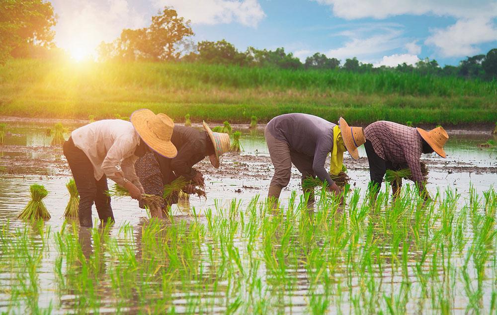 Thu Bon River delta region